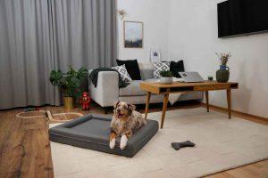 Ein süßer Australian Shepherd liegt im grauen Finnto Hundebett in einem Wohnzimmer