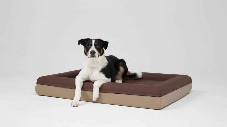 Ein schwarz-weißer Hunde liegt im braunen Finnto Hundebett im Fotostudio