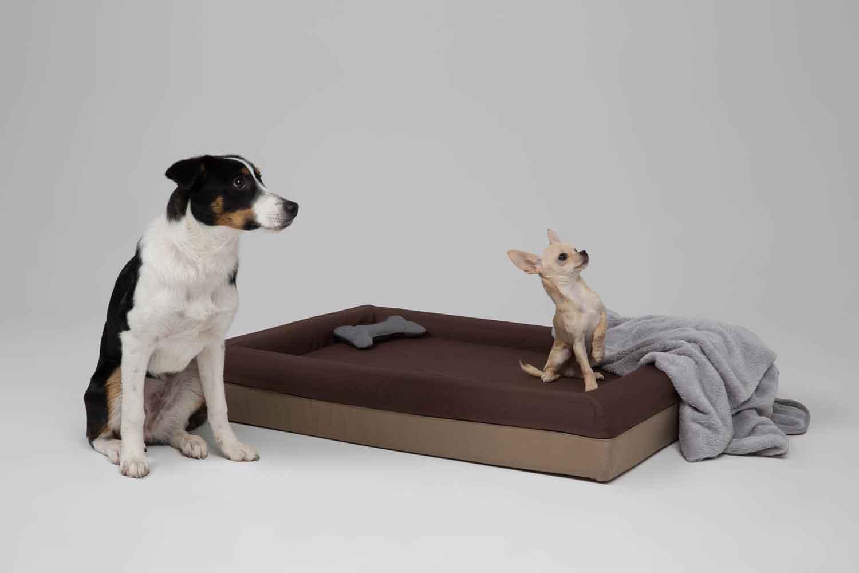 Zwei Hunde sitzen neben dem braunen Finnto Hundebett und schauen gespannt auf die Seite