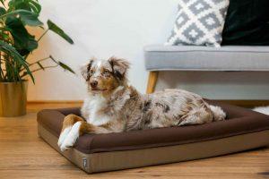 Der süße Australian Shepherd Hund liegt im braunen Finnto Hundebett und blickt nach oben