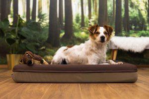 Ein Hund liegt mit seinem Kuscheltier im braunen Finnto Hundebett for einer Waldtapete